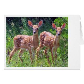 Cartão Gêmeos da jovem corça no Hawkweed
