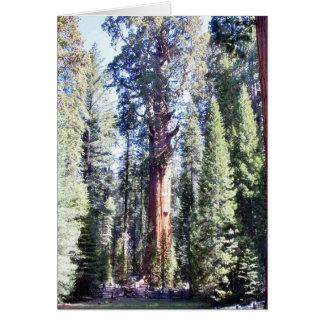 Cartão General Sherman Árvore Forrests