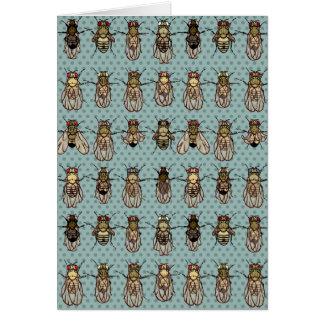 Cartão Genética da mosca de fruta da drosófila