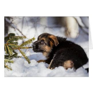 Cartão German shepherd que puxa o ramo de pinheiro