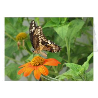Cartão gigante da borboleta de Swallowtail