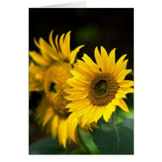 Cartão girassóis que embebem acima o sun.