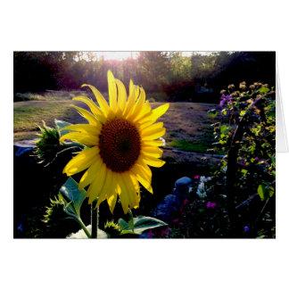 Cartão Girassol amarelo no por do sol ---