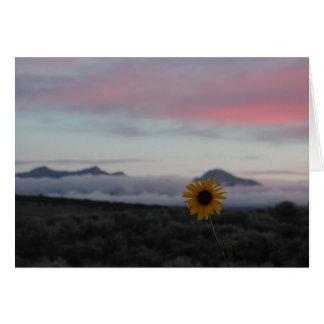 Cartão Girassol e Mt. Lindsey