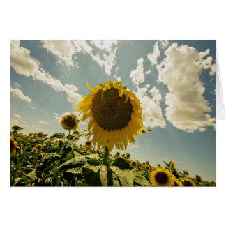 Cartão Girassol, flor de Sun, céu bonito