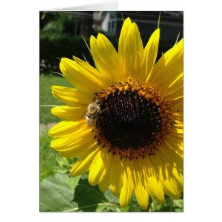 Cartão Girassol & luz do sol
