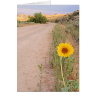 Cartão Girassol selvagem de Idaho