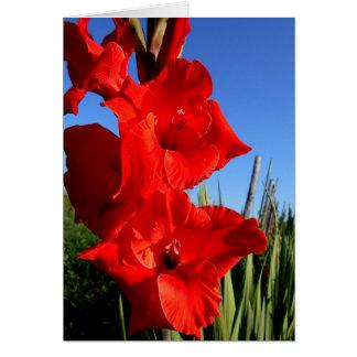 Cartão GladiolusAnd vermelho o céu azul