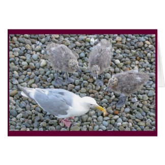 cartão Glaucous-voado das gaivota