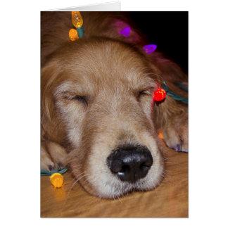 Cartão Golden retriever em luzes de Natal