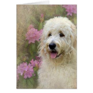 Cartão Goldendoodle com textura