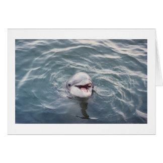 Cartão golfinho de bottlenose atlântico