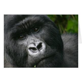 Cartão Gorila de montanha