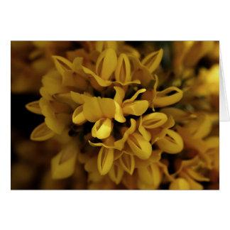 Cartão Gorse amarelo