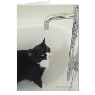 Cartão Gotejamento da água potável do gato de uma