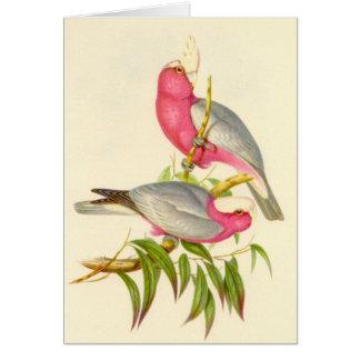 Cartão Gould - Cockatoo do Rosa-Breasted