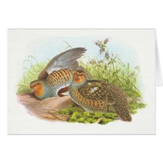 Cartão Gould - perdiz - perdix do Perdix