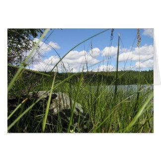 Cartão Grama do lago
