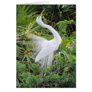 Cartão Grande dança branca do amor do Egret