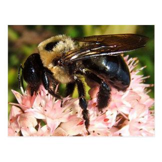 Cartão grande do ~ da abelha 93