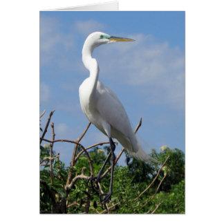 Cartão Grande Egret branco (0848)