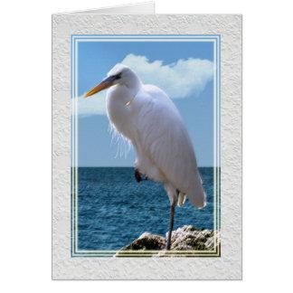 Cartão Grande Egret na borda da água