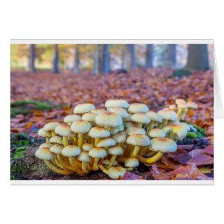 Cartão Grupo de cogumelos na floresta da faia da queda