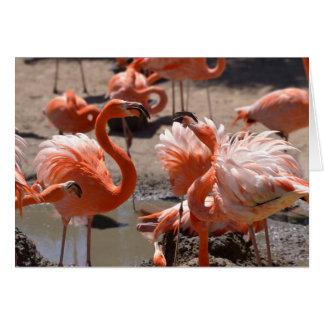 Cartão Grupo de flamingos de Cuba