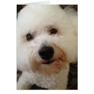 """Cartão """"Gucci"""" - um filhote de cachorro de Bichon Frise"""