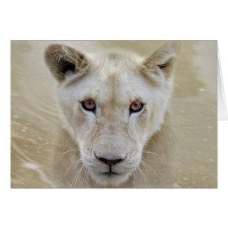 Cartão Guerreiro branco África do espírito do leão