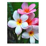 Cartão havaiano da flor do hibiscus cartão postal