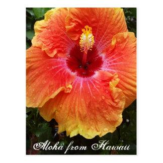 Cartão havaiano, Havaí, aloha, hibiscus, flor,