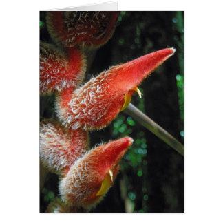 Cartão Heliconia havaiano