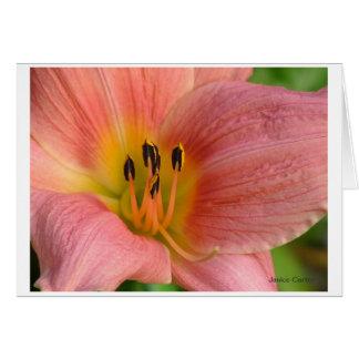 Cartão Hemerocallis cor-de-rosa