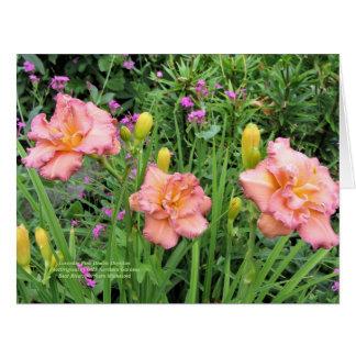 Cartão Hemerocallis dobro cor-de-rosa da lavanda