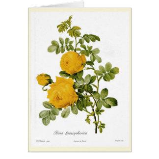 Cartão Hemispherica de Rosa