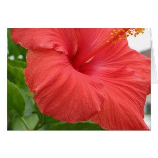 Cartão Hibiscus - grande