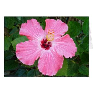 Cartão Hibiscus - N