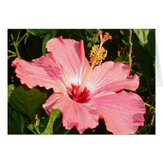Cartão Hibiscus - R