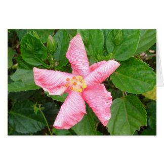 Cartão Hibiscus tímido