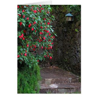 Cartão Hibiscus tropical