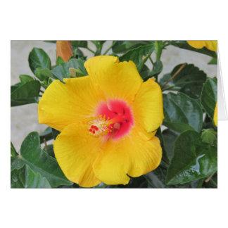 Cartão Hibiscus tropical amarelo