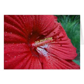 Cartão Hibiscus vermelho com pingos de chuva