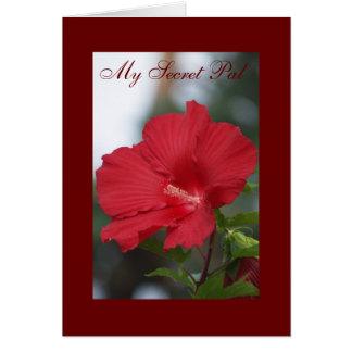 Cartão Hibiscus vermelho, meu amigo secreto
