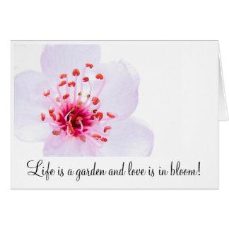 Cartão high-key-sakura-blossom-800, vida é um jardim…