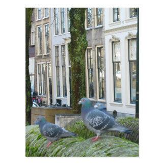 Cartão holandês das casas e dos pombos do canal