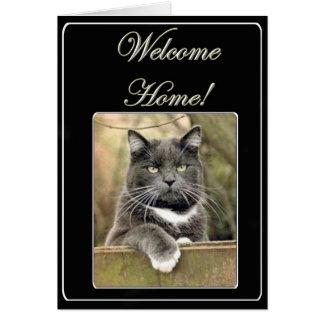 Cartão home bem-vindo do gato