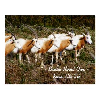 Cartão Horned do Oryx do Scimitar