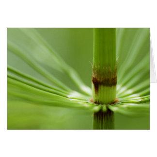 Cartão Horsetail, Columbia Britânica do parque de Stanley
