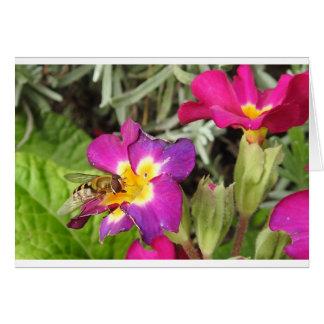 Cartão hoverfly descansando